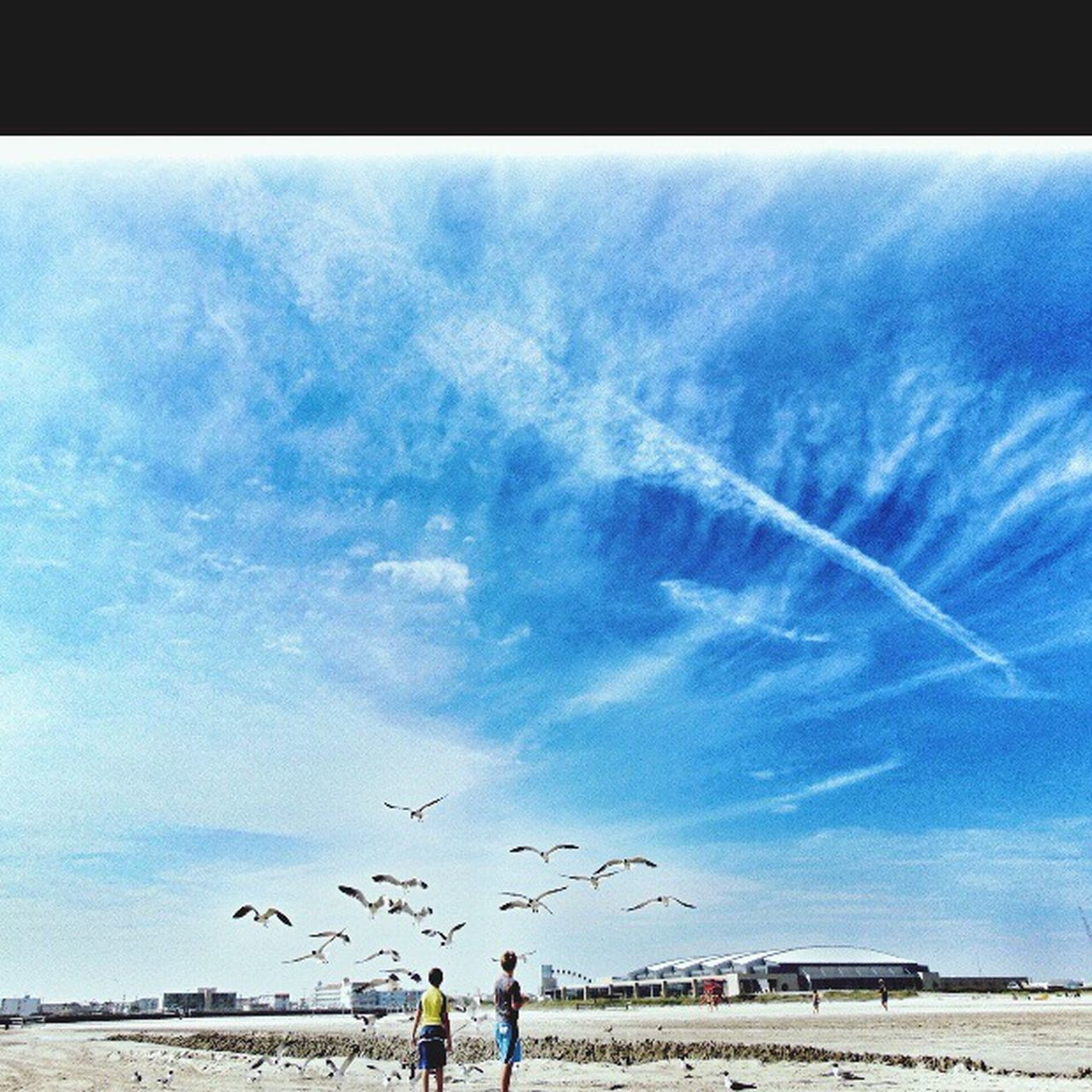 flying, sky, blue, day, large group of animals, large group of people, leisure activity, real people, flock of birds, outdoors, beach, bird, beauty in nature, nature, animal themes, vapor trail, people