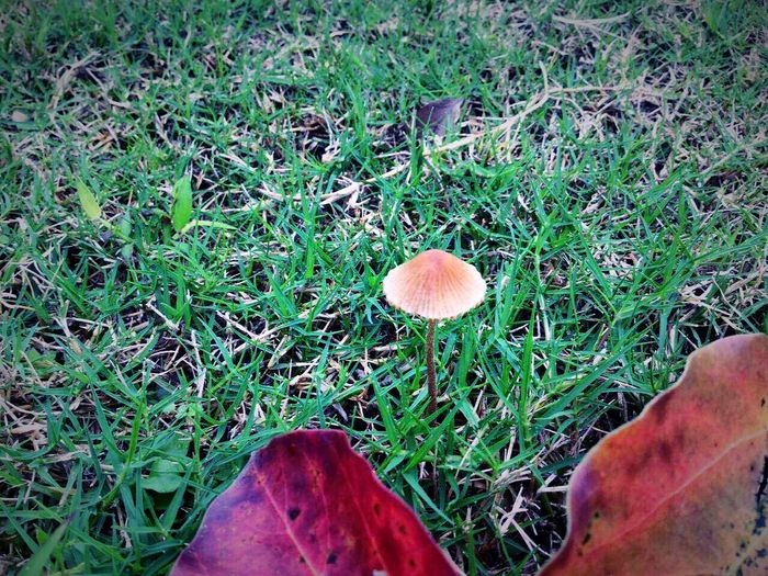 Find some cute mushrooms on the grassland 🍄🍄