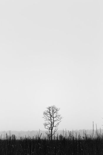 minimal Black & White EyeEm Best Shots EyeEm Nature Lover EyeEm Selects EyeEmNewHere Nature Bare Tree Beauty In Nature Black And White Blackandwhite Clear Sky Environment Field Isolated Land Landscape Nature No People Non-urban Scene Outdoors Plant Scenics - Nature Tranquil Scene Tranquility Tree