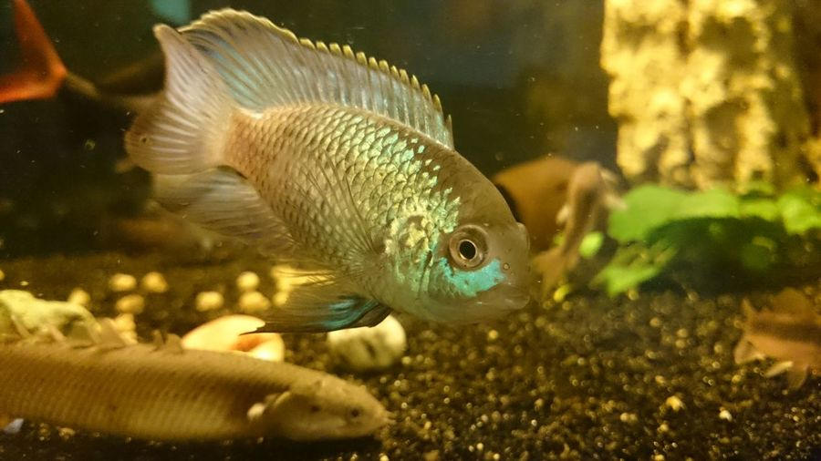 Water Fish Close-up Animal Swimming Aquarium Animal Themes No People One Animal Sea Life Nature Goldfish Day Outdoors