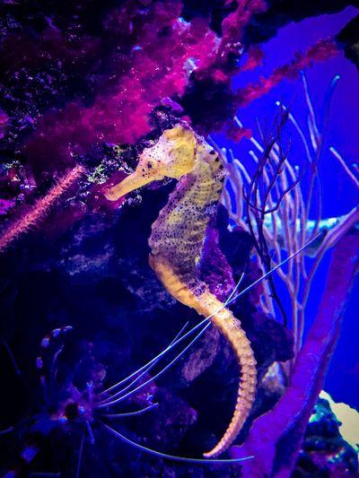 Maximum Closeness Aquarium Underwater Water Sea Life UnderSea Sea Horse Animal Wildlife Gorgeous Beautiful Color Nature Colorful Detail