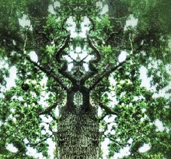 Tree antlers Mirrored HTC_photography Scarytrees Eyemphotography On Way To Work