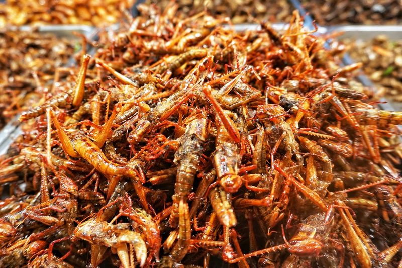 Close-up of insect on display at market stall