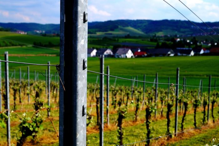 Winemaking Landscape_captures Landscape Photography Nature_collection Colorphotography Löwensteiner Berge GERMANY🇩🇪DEUTSCHERLAND@ Fotography Color Photography The Week On Eyem Löwenstein Landscape_Collection EyeEm Best Shots Grape Fields Outdoors Landscape No People Mountain Beauty In Nature Green Color Cloud - Sky Field Focus On Foreground Photography Themes Sky