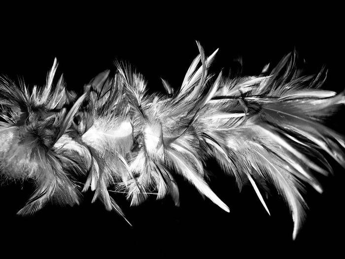 Wings Beauty In