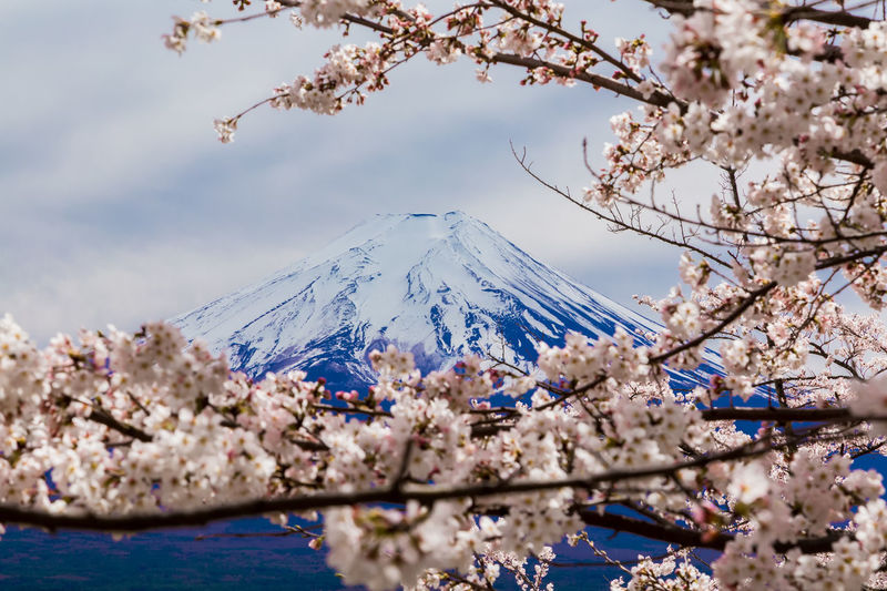 View of cherry blossom against snowcapped mountain