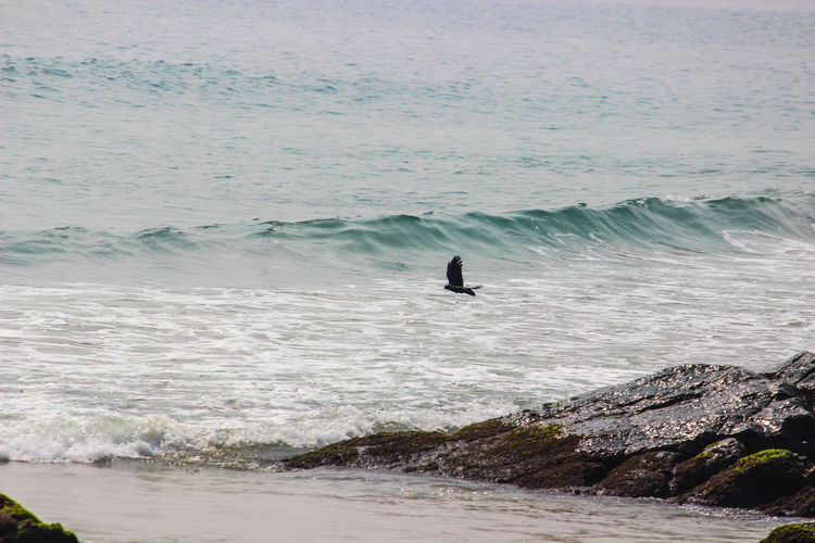 THE CROW IS FLYING OFF FROM THE CLIFF Crow Flying Off Surfing Sea Nature Wave Water Beach Beauty In Nature Day Motion A New Beginning