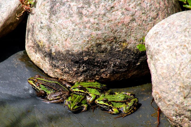 Frog Frogs Sea Stone Stones Water Water_collection Water Reflections Getting Inspired Talking Pictures