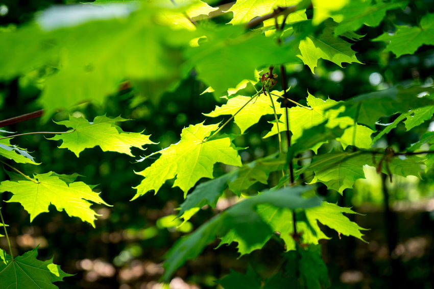 Animal Animal Themes Beauty In Nature Close-up Day Environment Green Color Growth Insect Invertebrate Land Leaf Leaves Nature No People Outdoors Plant Plant Part Selective Focus Tranquility