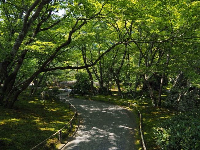 Kyoto Japan Arashiyama Hogonin Temple Nature Tree Beauty In Nature Growth Garden Outdoors Green No People Day Grass Healing Silence Summer Olympus PEN-F 京都 日本 嵐山 宝厳院 獅子吼の庭 借景回遊式庭園