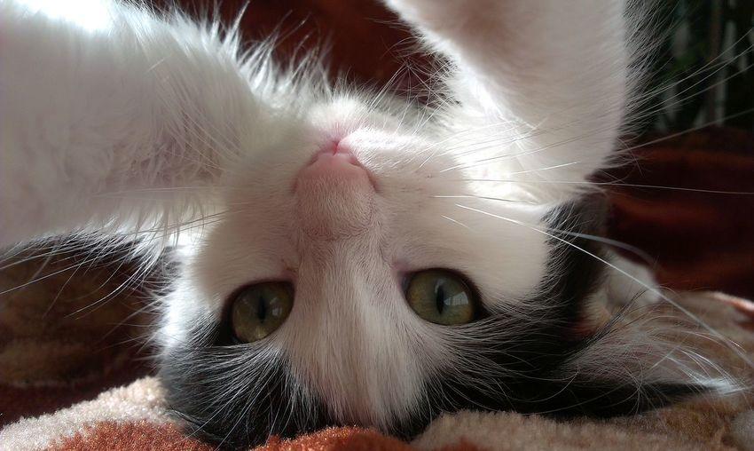 Pets Close-up