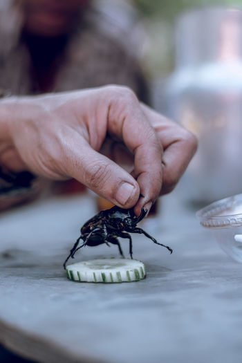 Human Hand Hand Human Body Part Close-up Finger Beetle Selective Focus Holding