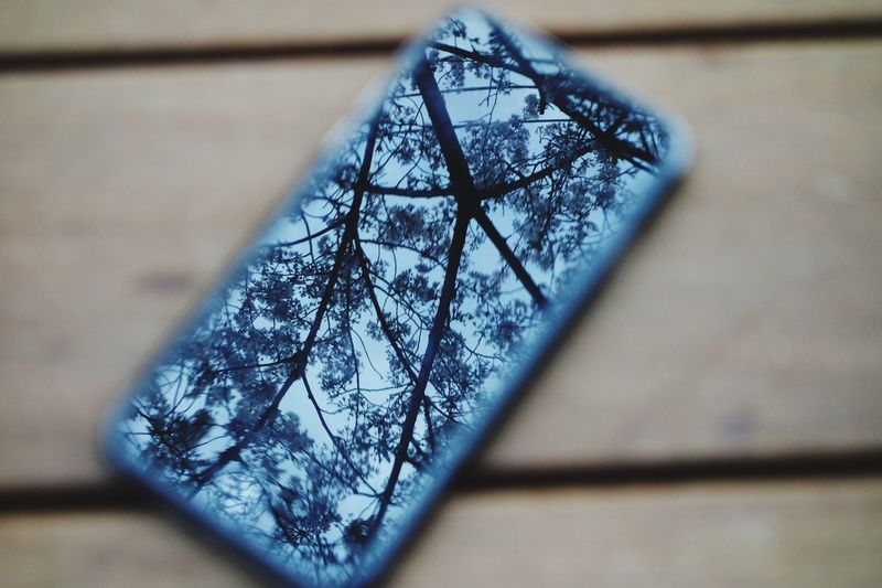 Reflection of trees on mobile phone