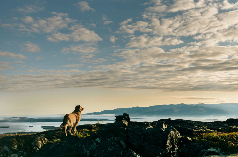Dog standing on rock against sky during sunset
