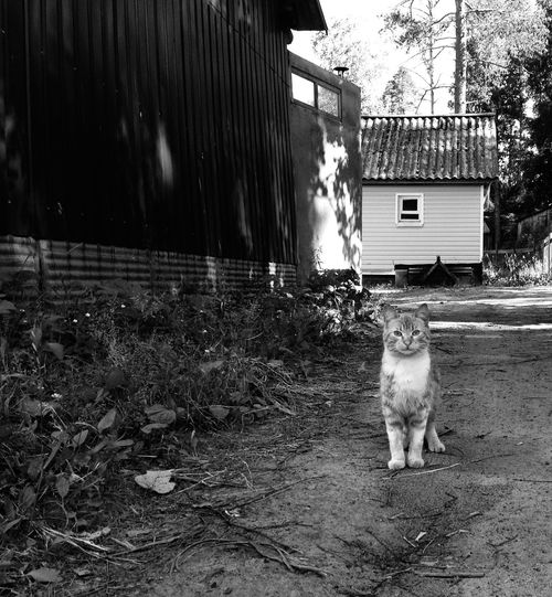 Cats Cat Watching Countryside Bw_collection