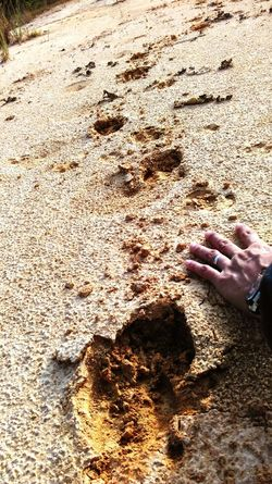 The Following Try to compare how big the traces of wild animals are. Traces Traces In The Sand Path In The Forest Footprints In The Sand Deep Feetprints Smartphone Photography