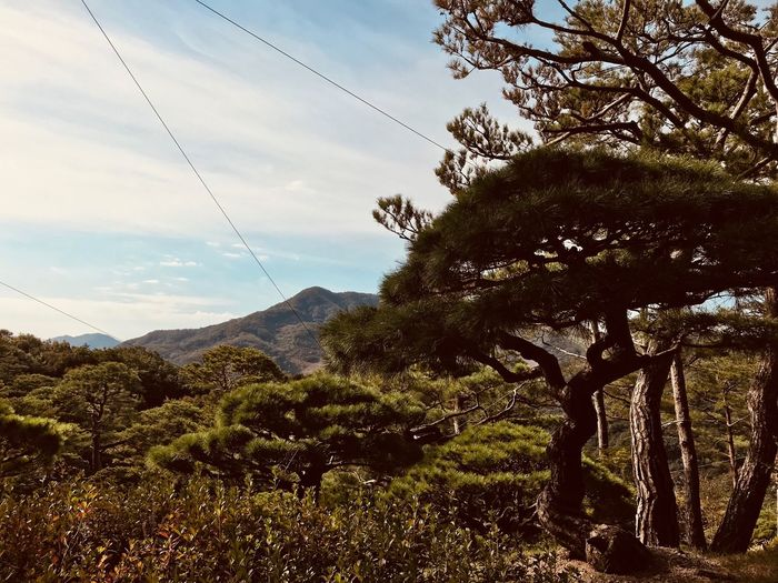 Hwadamsup Tree Mountain Nature Cable Beauty In Nature Scenics Sky Day Outdoors Tranquility No People Tranquil Scene Growth Landscape Mountain Range Korea