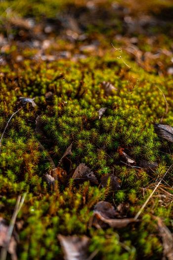 High angle view of moss growing on land