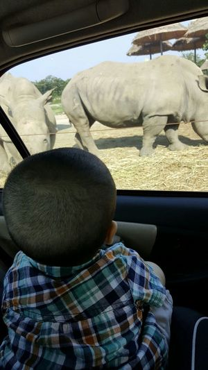 Boy Rhinos Zoo Zoophotography Safari Park Up Close And Personal Moment Interest Observer Observing Nature
