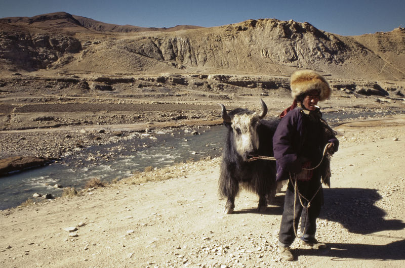 Analogue Photography Animal Themes Beauty In Nature Day Domestic Animals Full Length Mammal Nature One Animal One Person Outdoors People Pets Real People Rear View Scenics Sky Slide Slidefilm Tibet Tibet Travel Tibetan  Warm Clothing Winter Yak