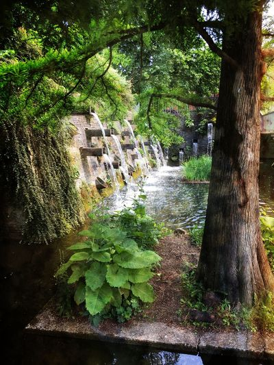 Hamburg Beauty In Nature Green Color Nature Outdoors Plant Water Waterfall