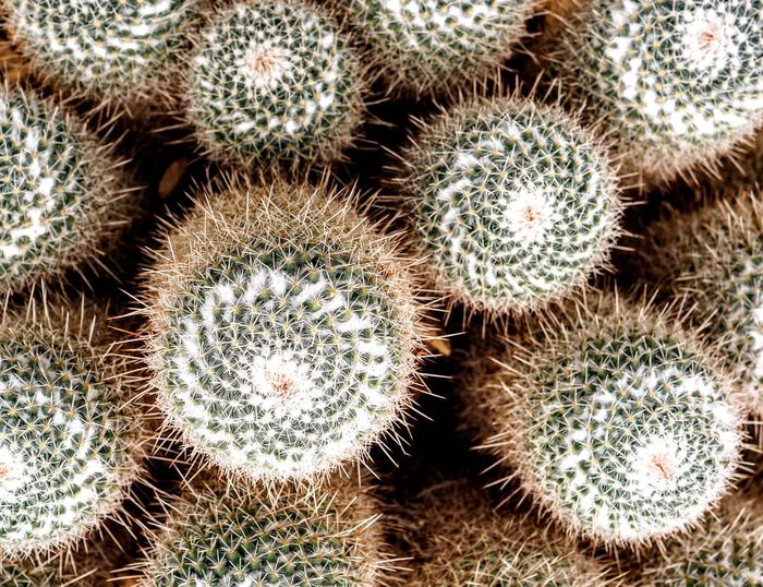 Full frame shot of cactus