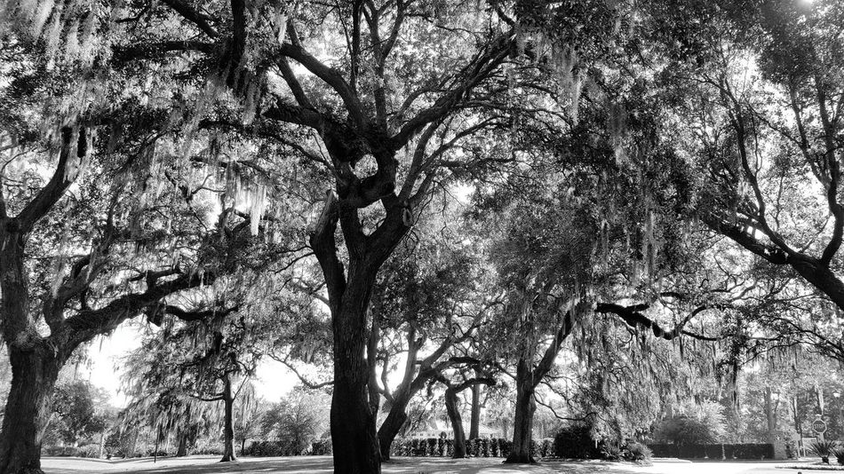 Southern Charm Southern Life Southern Landscapes Southern Living Tree_collection  Treescape Trees And Sky South Carolina Litchfield Eyem Nature Lovers