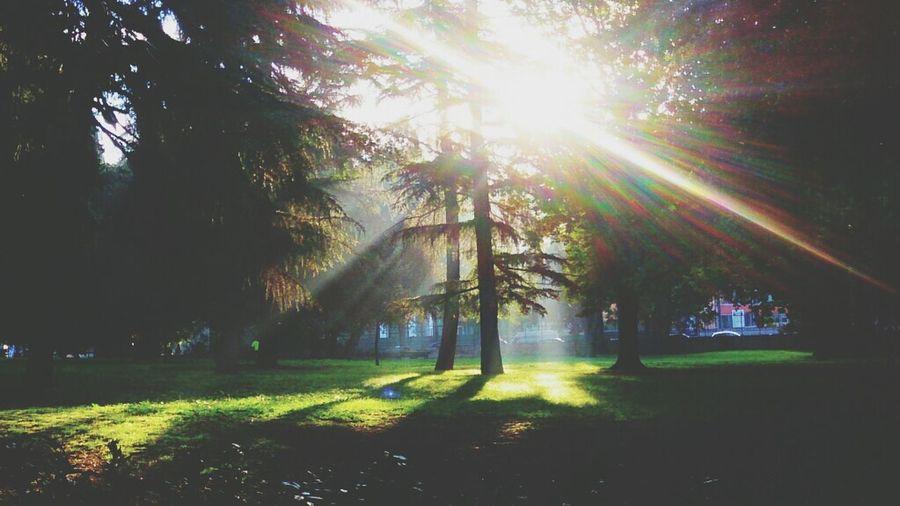 Tree Sun Light Nature
