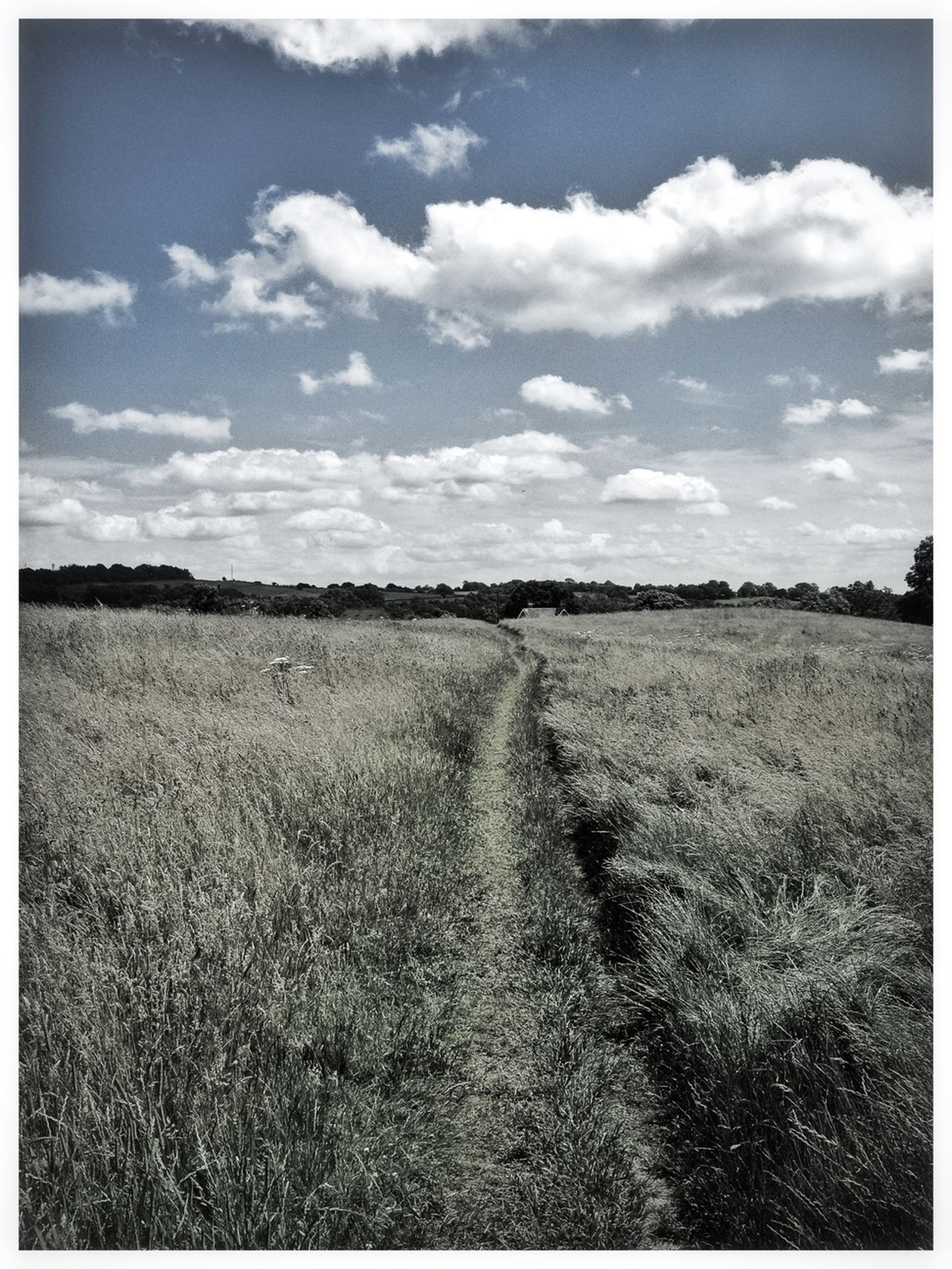 field, landscape, sky, tranquil scene, tranquility, rural scene, agriculture, grass, scenics, horizon over land, cloud - sky, nature, farm, beauty in nature, transfer print, cloud, auto post production filter, growth, grassy, crop