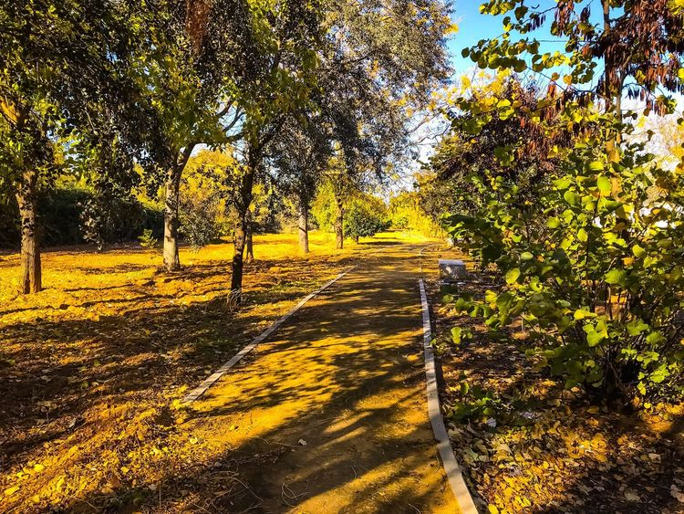 Winter has come.. Tree Nature Growth Autumn The Way Forward Outdoors Sunlight Tranquil Scene Tranquility Shadow Day No People Scenics Landscape Yellow Beauty In Nature Agriculture Rural Scene Sky