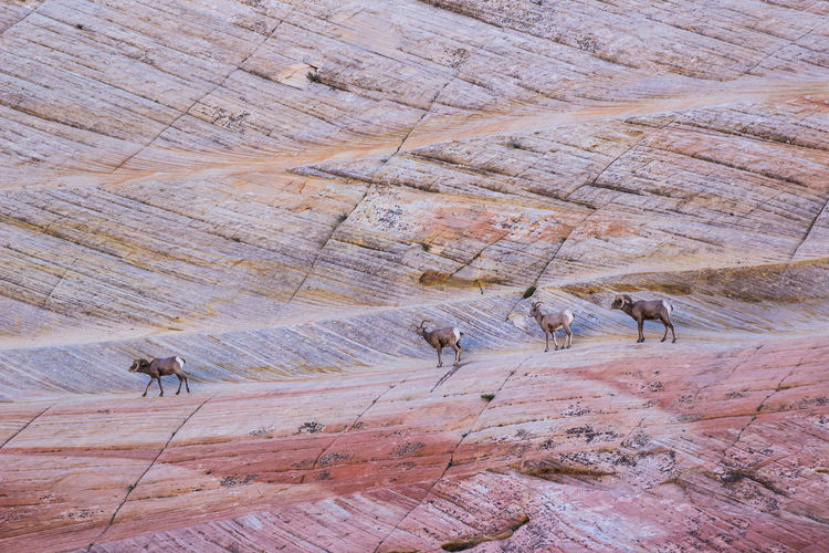 National Park Nature Zion Zion Canyon Zion National Park Animal Themes Beauty In Nature Domestic Animals Mammal Travel Destinations Zionnationalpark EyeEmNewHere