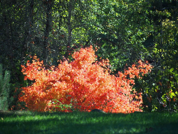 Fall Beauty Fall In Orange Green And Orange Colours Of The Season Lost In The Landscape Orange Leaf Beauty In Nature Fall Colours In The Fall Fall Leaves Golden Fall Colours Growth Nature Outdoors Tranquility Tree
