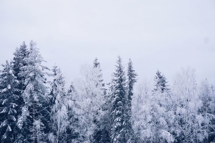 Snow covered trees in forest against sky