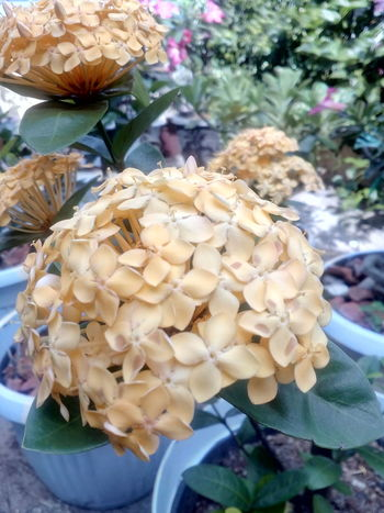 EyeEmNewHere Nature No People Growth Outdoors Day Beauty In Nature Be. Ready. Freshness Jakarta PusatFlowerlovers Beauty In Nature Adult EyeEm Selects INDONESIA Nature Close-up Freshness Fungus Flower Fragility Food