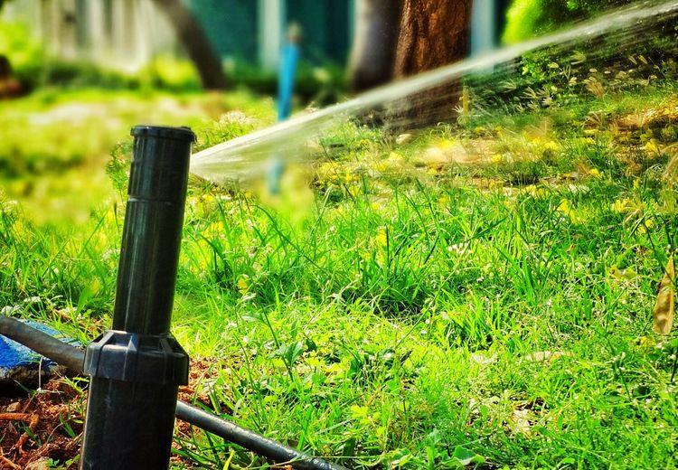 Time to water plants :) Watering Nature Green Grass Chennai EyeEm Masterclass Tamilnadu Digicam Tadaa Community My Life
