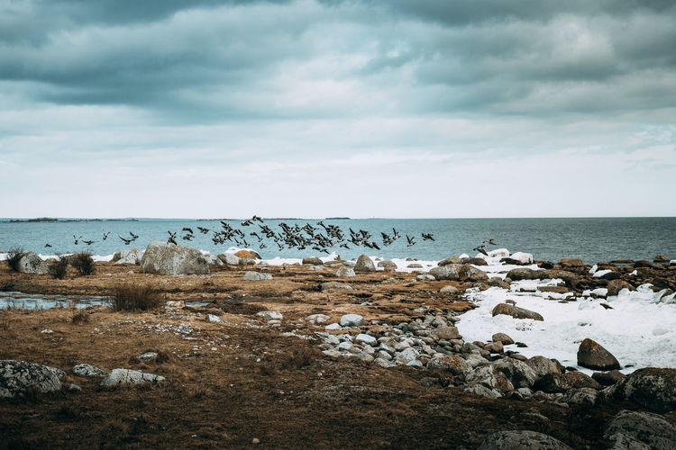 A great day outside Åhus in southern Sweden. Great light and lovely scenics! EyeEm Best Shots Animal Themes Beach Beauty In Nature Cloud - Sky Day Horizon Over Water Large Group Of Animals Mammal Nature No People Outdoors Rock - Object Scenics Sea Sky Tranquility Water