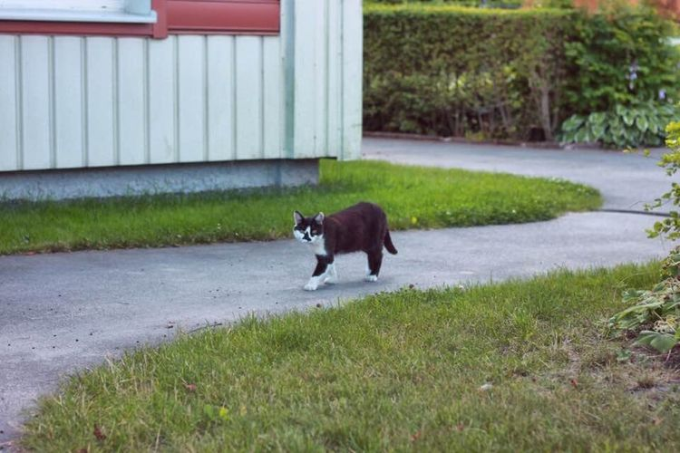 """This fellow was my friend all 30 seconds until he or she """"I'dont know?"""" Run away from me. :) Cat Easy Scared Outdoors Frinds Hello World Taking Photos Enjoying Life Eye4photography  Eyeem Photography Stockholm, Sweden Swedish Photographers Summer Animals"""