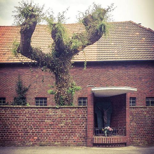Nature Tree Jesus Believe Kiddingonjesus Wall