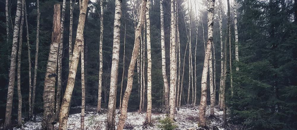 Into the woods Wood Nature Winter No People Forrest Beauty In Nature Backgrounds