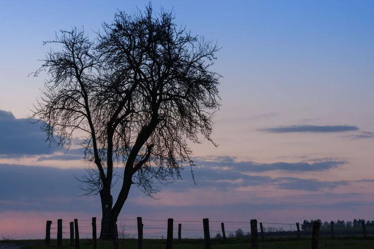 Wegmarke Baum Evening Light Evening Sky France Frankreich ♥ Lorraine Lothringen Obstbäume Sunset Tree