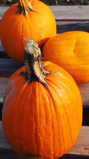 Luck pumpkin
