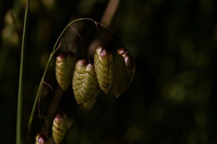 Close-up of flower bud