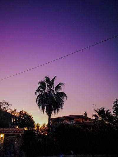 Rocca di Neto-Crotone,Calabria Calabria (Italy) P20 Pro Nature Photography Tree Sunset Silhouette Sky