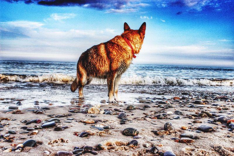 Dogs Dog Beachphotography Love
