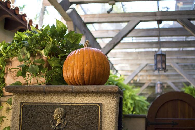 Close-up view of pumpkins