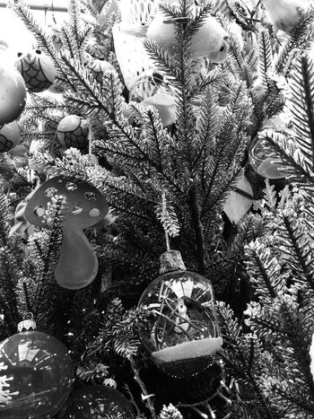 🎄🎅🎄 Nopeople Santa monochrome photography Monochrome Decoration Christmas Ornament christmas tree Tree Christmas Christmas Decoration Full Frame No People Day Backgrounds Nature Outdoors Close-up High Angle View Animal Animal Themes