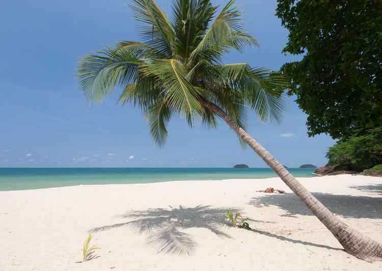 Palm tree by sea against sky
