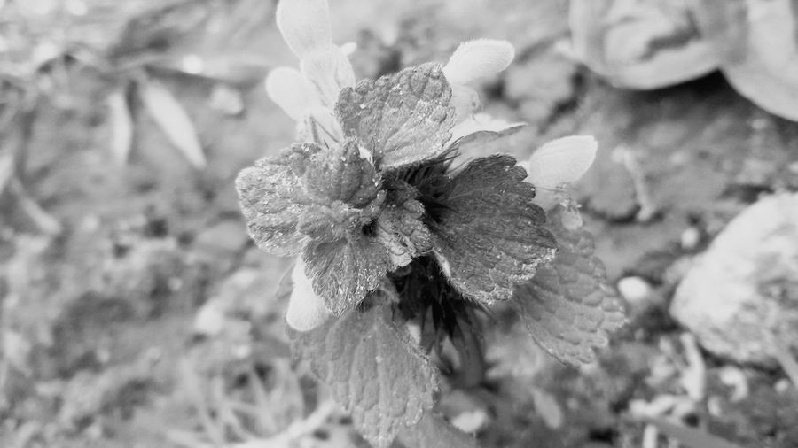 Flower Plant Nature Outdoors Day Beauty In Nature No Colors Black And White EyeEmNewHere The Great Outdoors - 2017 EyeEm Awards