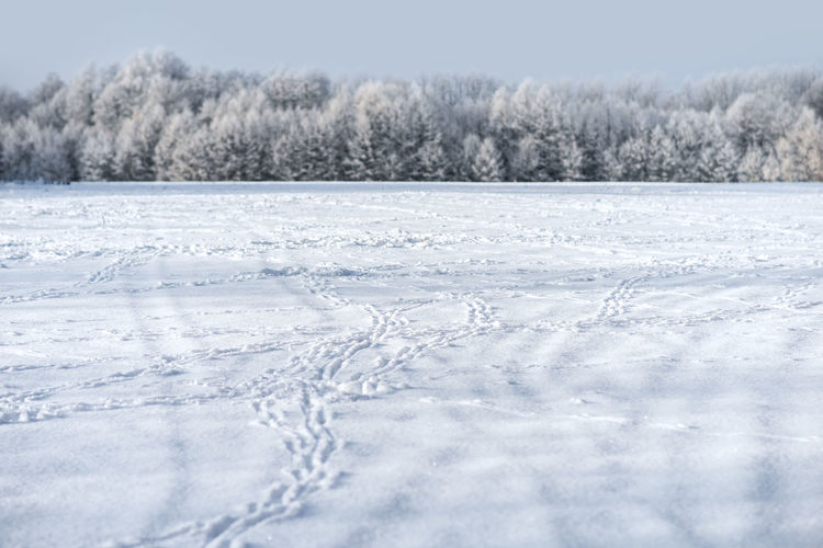 Animal footprints on the snow-covered field Beauty In Nature Cold Cold Temperature Day FootPrint Footprints In The Snow Frozen Ice Landscape Nature No People Outdoor Outdoors Paw Rural Scene Scenics Snow Tracks Trail Tranquil Scene Tree White Color Wildlife Winter Fresh On Market 2017