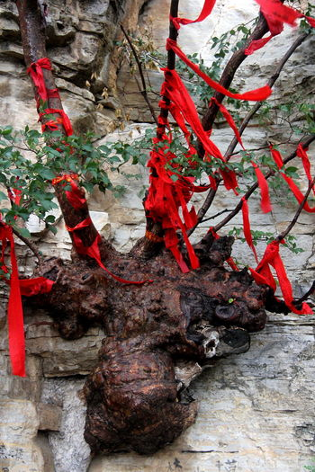 Close-up Culture Datong Mountains Day Dragon Shaped Tree Dragon Tree Growth Multi Colored My Favorite Photo Nature No People Outdoors Red